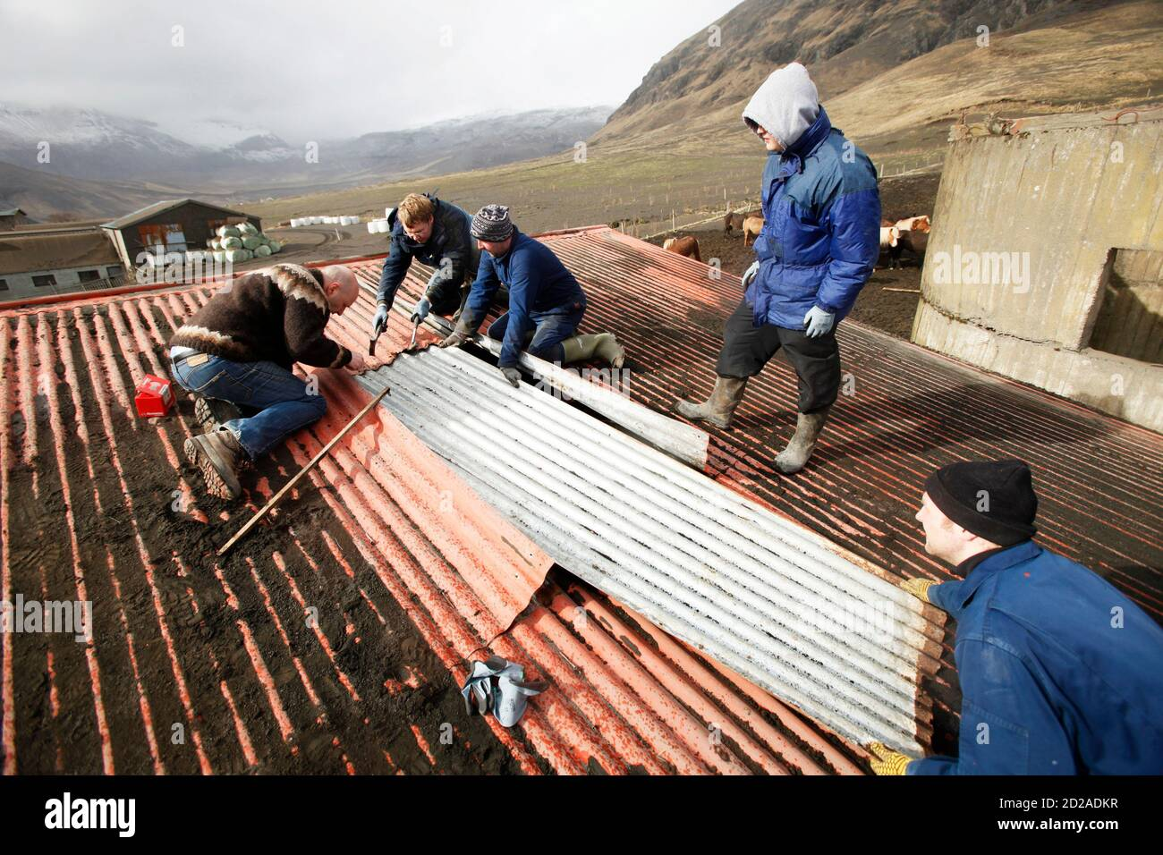 Farmers (from L to R) Hans Thorvaldsson, Benedikt Eythorsson, Bjarni Thorvaldsson, Thorgrimur Bjarnason, and Arni Bjarnasson repair a hole on a barn roof as they work to clean off volcanic ash that has accumulated from an erupting volcano near Eyjafjallajokull April 18, 2010.  REUTERS/Lucas Jackson (ICELAND - Tags: DISASTER ENVIRONMENT) Stock Photo
