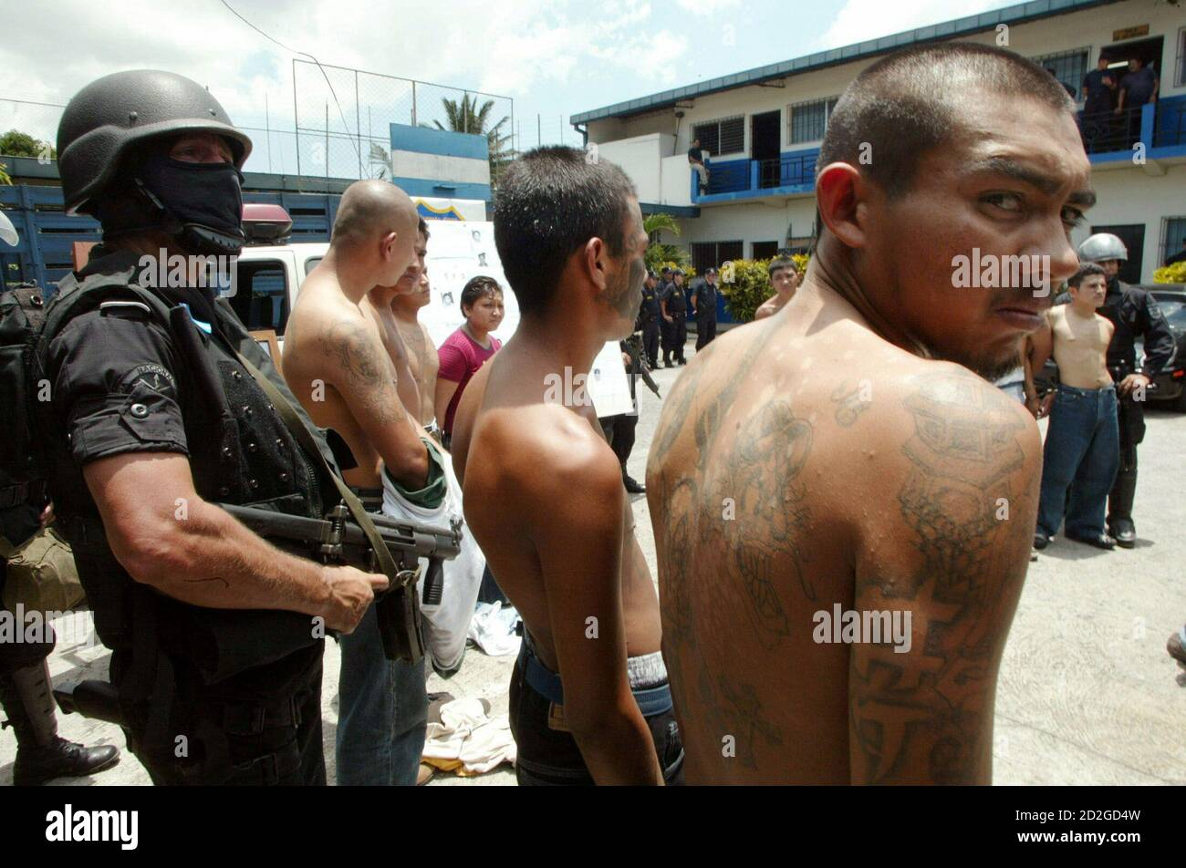 Gang members are escorted after being captured by riot police in San Salvador September 8, 2005. [Authorities announced that the Simultaneous International Anti-Gang Operations in five different countries -- Mexico, Guatemala, El Salvador, Honduras and the United States -- have netted some 660 suspects.] Stock Photo
