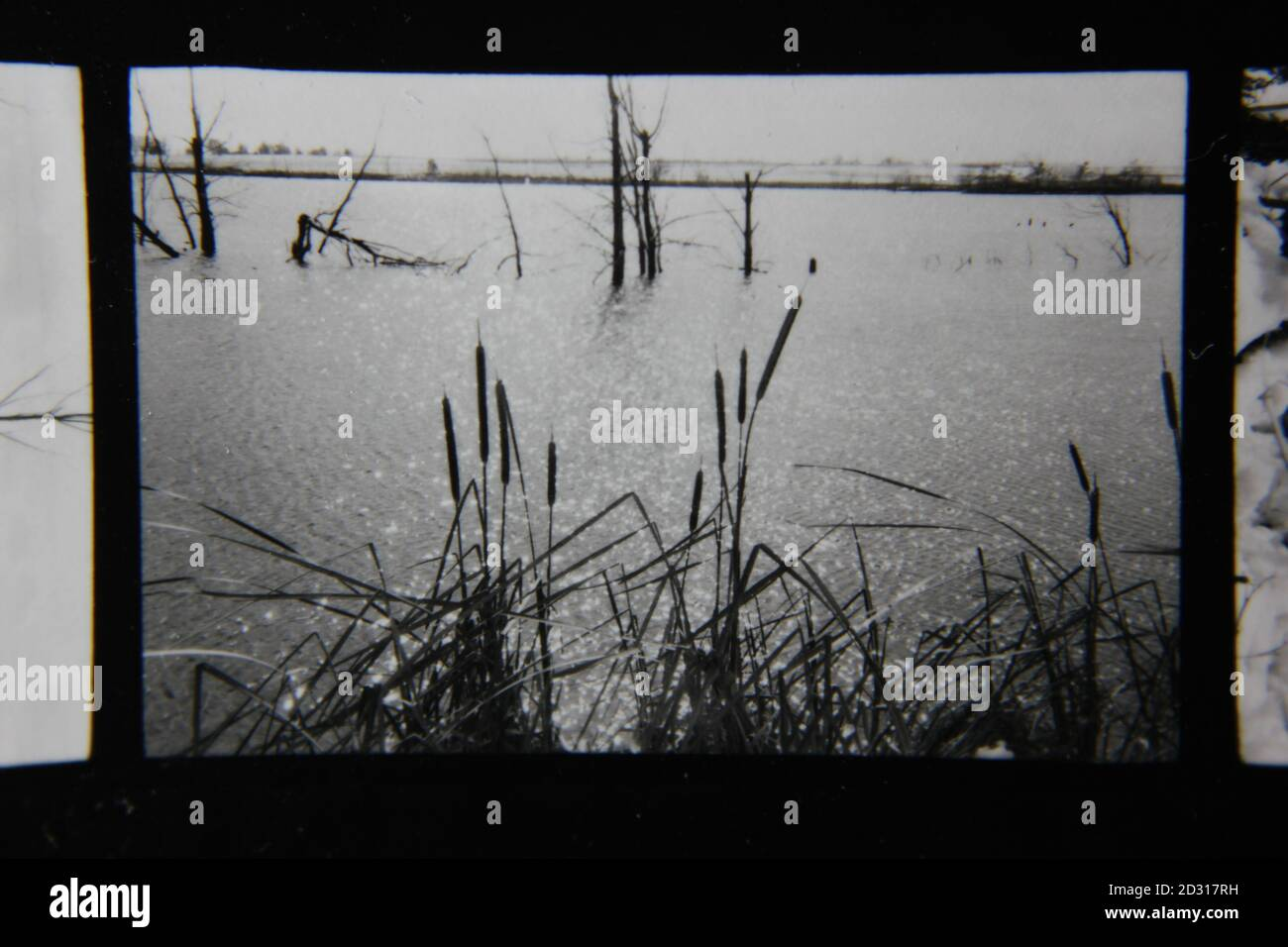 Fine 1970s vintage black and white photography of natural wetlands. Stock Photo