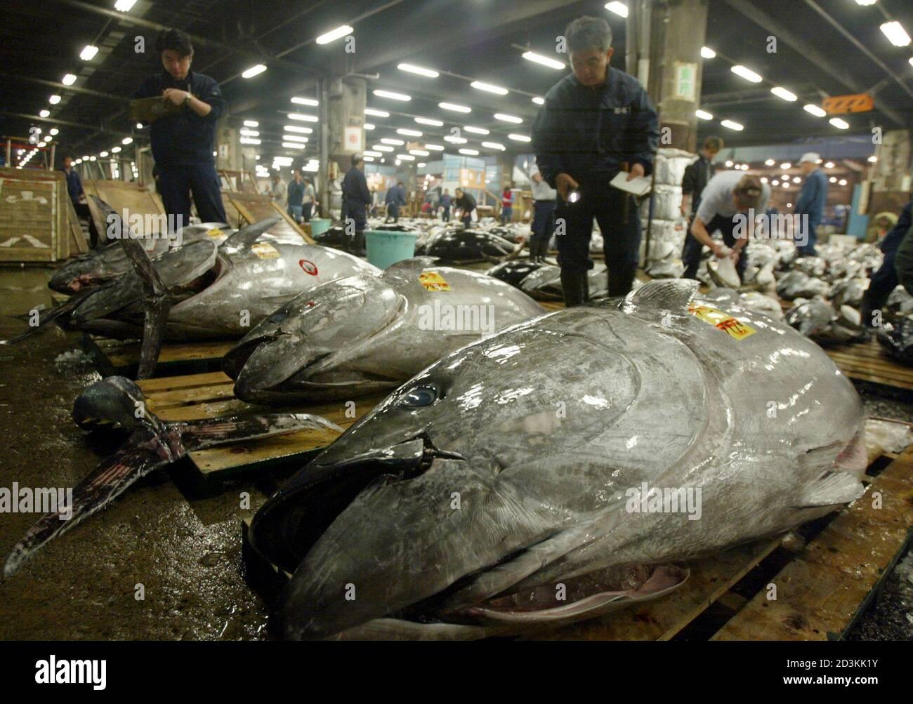 Biggest fish worlds 10 Largest