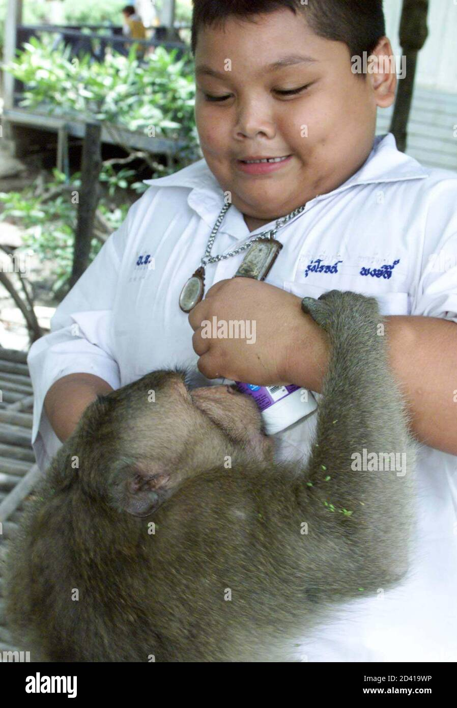 A stray monkey tries to steal a bottle of yoghurt from a student during lunchtime at a school in Samul Songkram province, 80 km southwest of Bangkok May 29, 2001.  About 100 pupils at Ban Chu Chee Primary School have been robbed of food by over 150 monkeys, whose mangrove habitat has constantly been encroached by human beings for over a year. Stock Photo