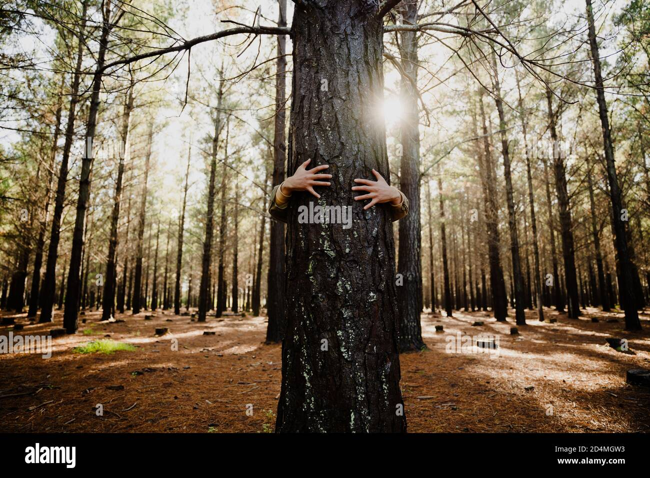 Close-up caucasian hands hugging tree trunk with sunlight raise, promoting a sustainable planet Stock Photo