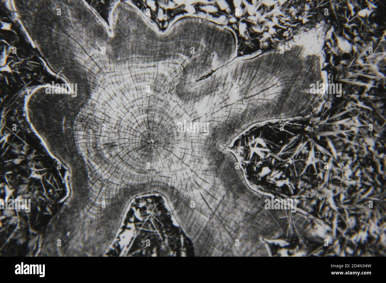 Fine 1970s vintage black and white photography of a closeup of the natural world in a high contrast abstract notion. Stock Photo