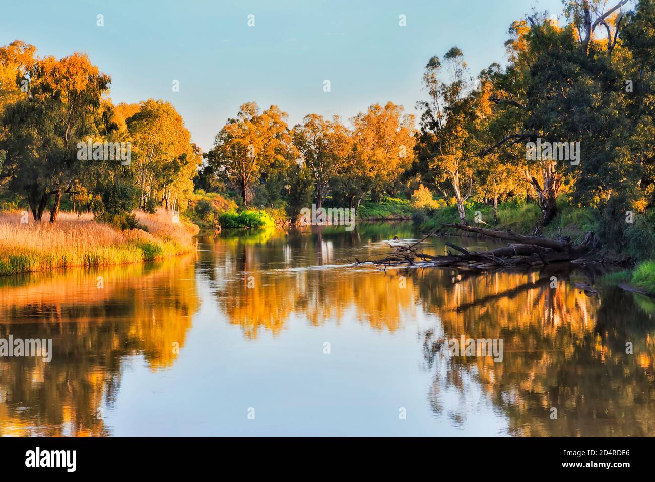 Scenic gumtrees and grass on shores of Macquarie river in Dubbo city of Australia western plains - NSW. Stock Photo