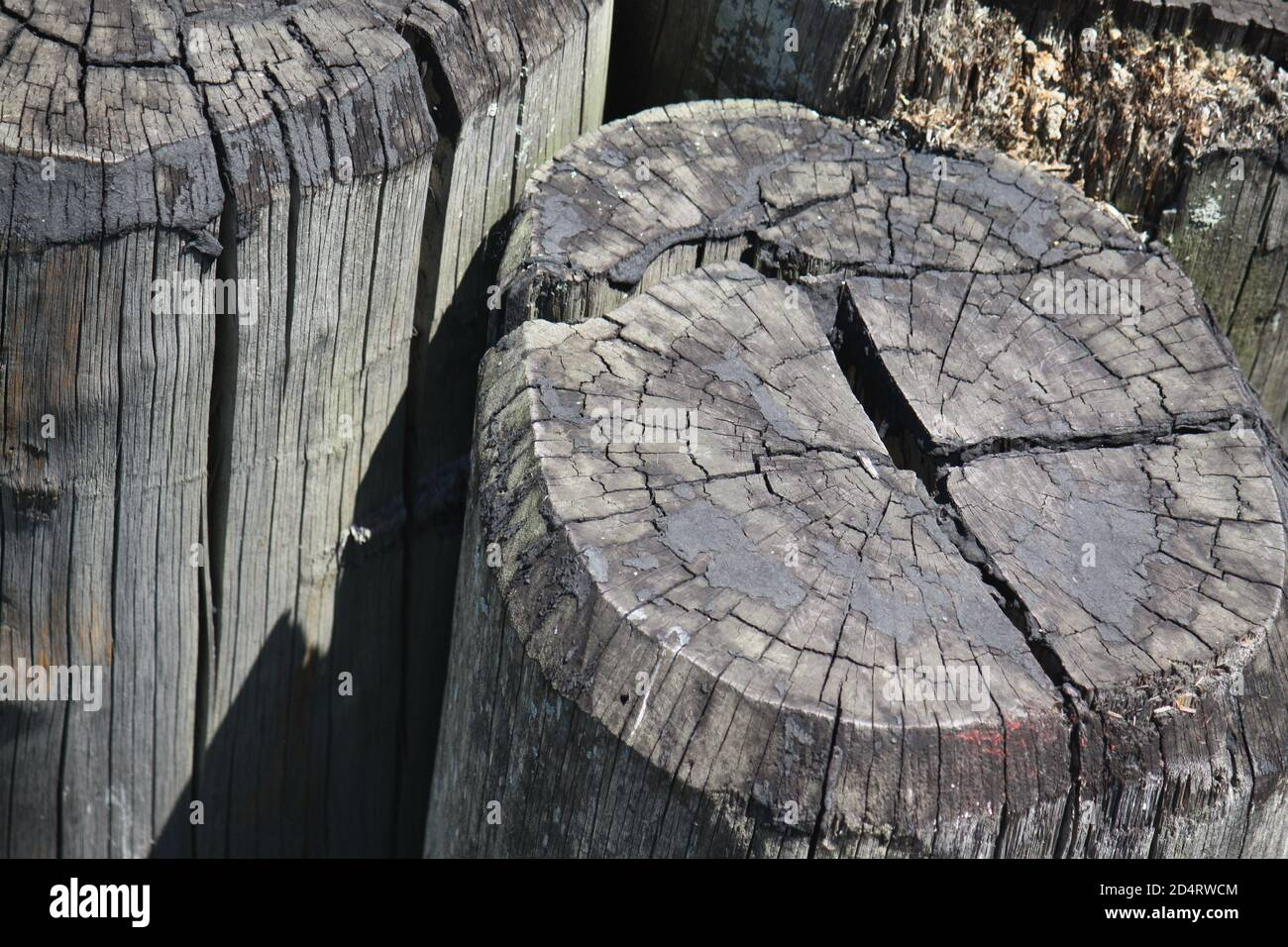 Wooden poles in New York Stock Photo