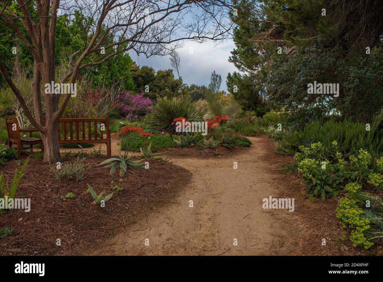 Davis California Usa November 28 2019 Path To A Garden With Aloe Redbud And Other Flowers At The Uc Davis Arboretum In The Spring On A Sunny Stock Photo Alamy