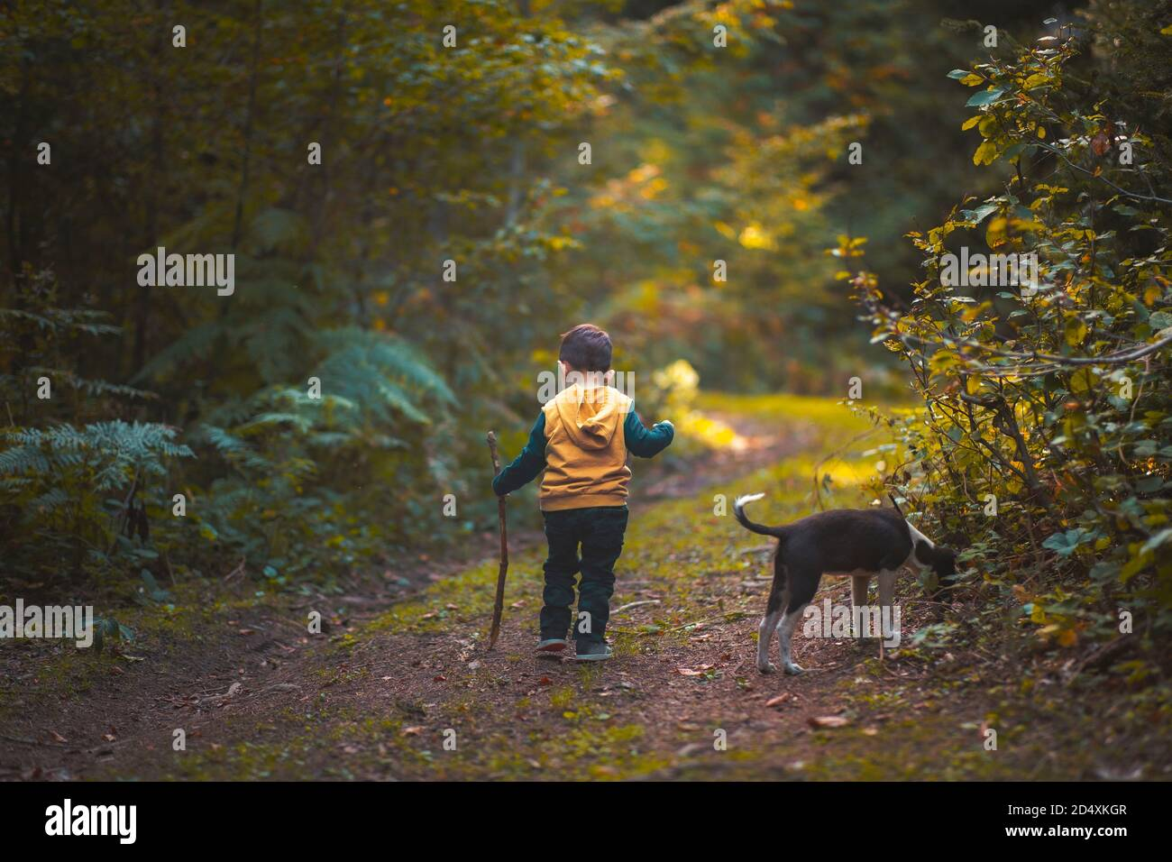 a small boy walking on a path with a dog in a forest autumun season Stock Photo