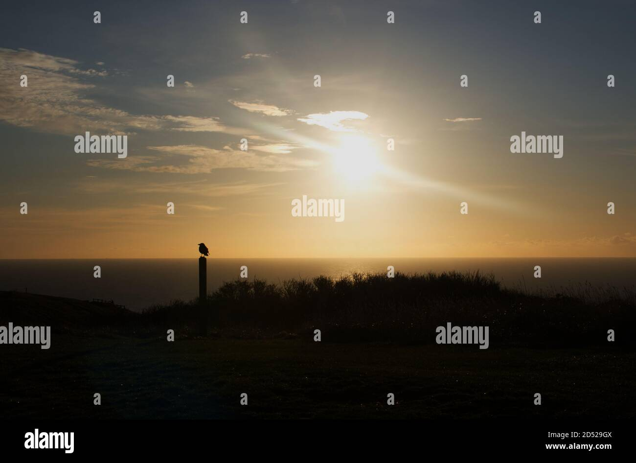 A view of a lone crow looking across the English Channel at the sunrise from Beachy Head, Eastbourne, Sussex, England, UK. Stock Photo
