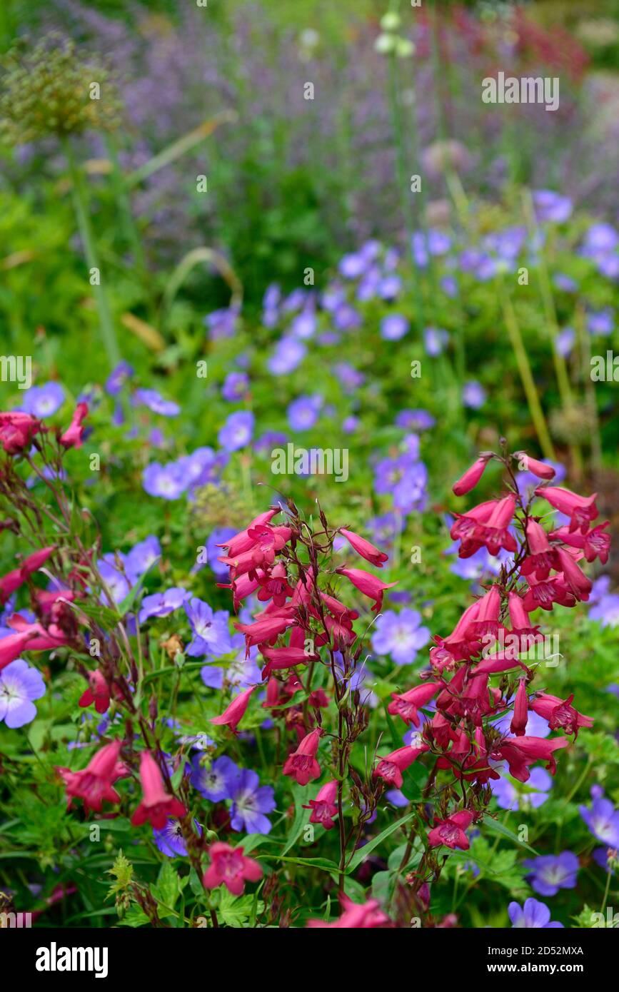 Blue flower and red Garnet