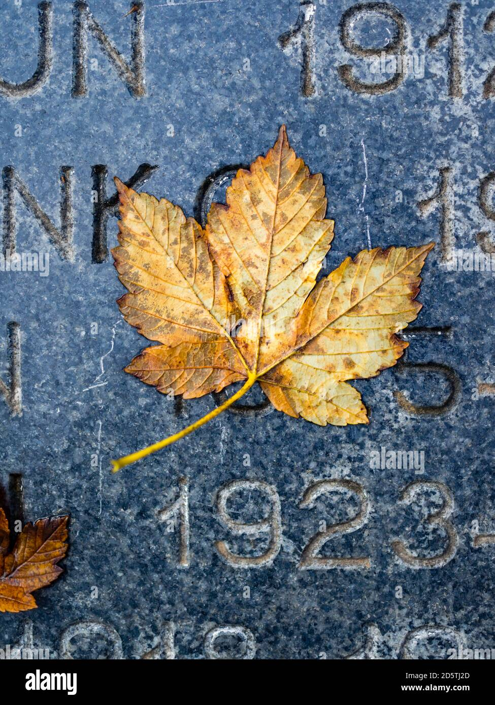 Damp fallen leaf water-glued attached single one singularity Fall Autumn season seasonal year years number numbers eched in marble surface 1923 Stock Photo