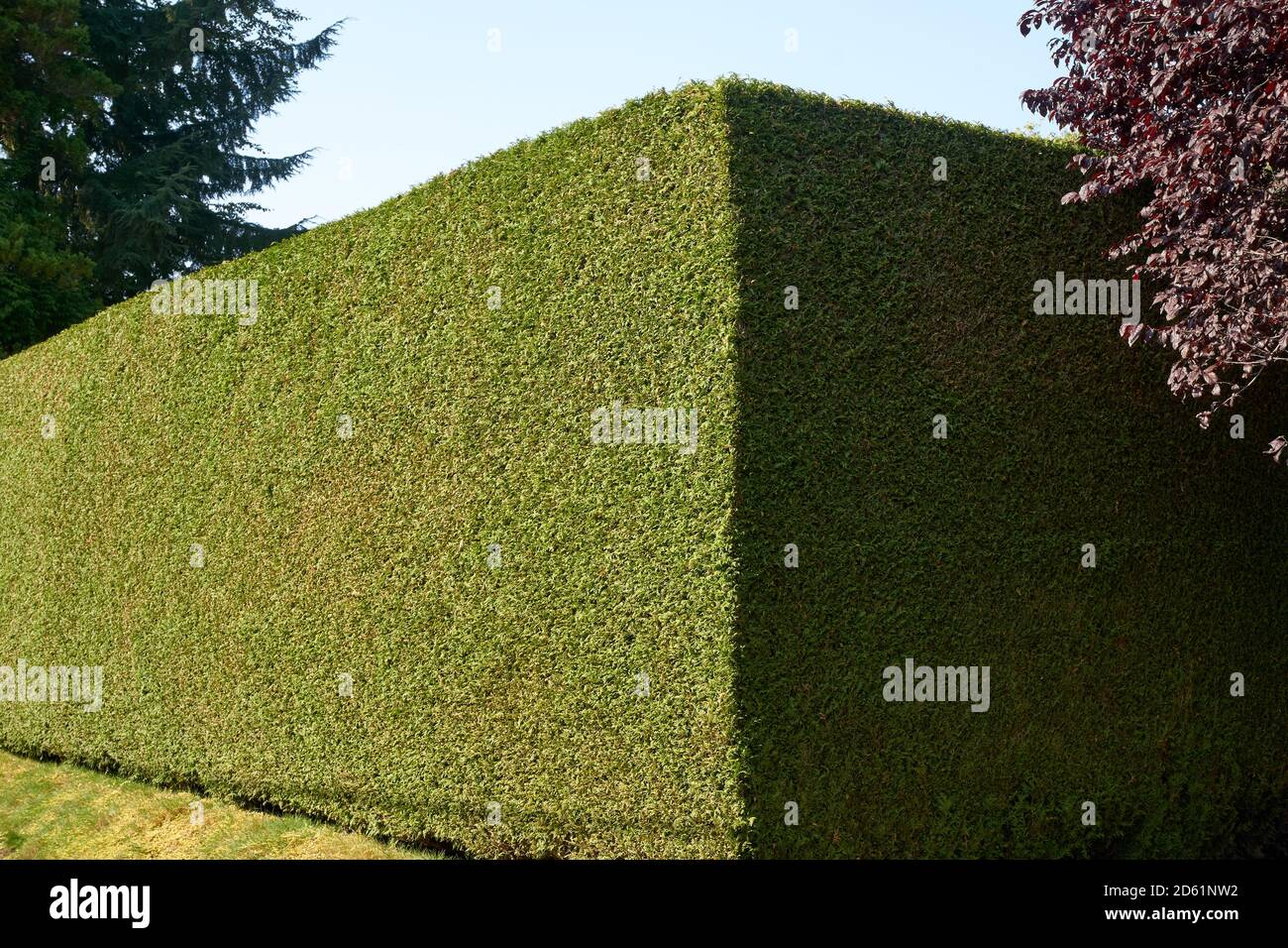 When Is The Best Time For Pruning Arborvitae Hedges Laidback Gardener