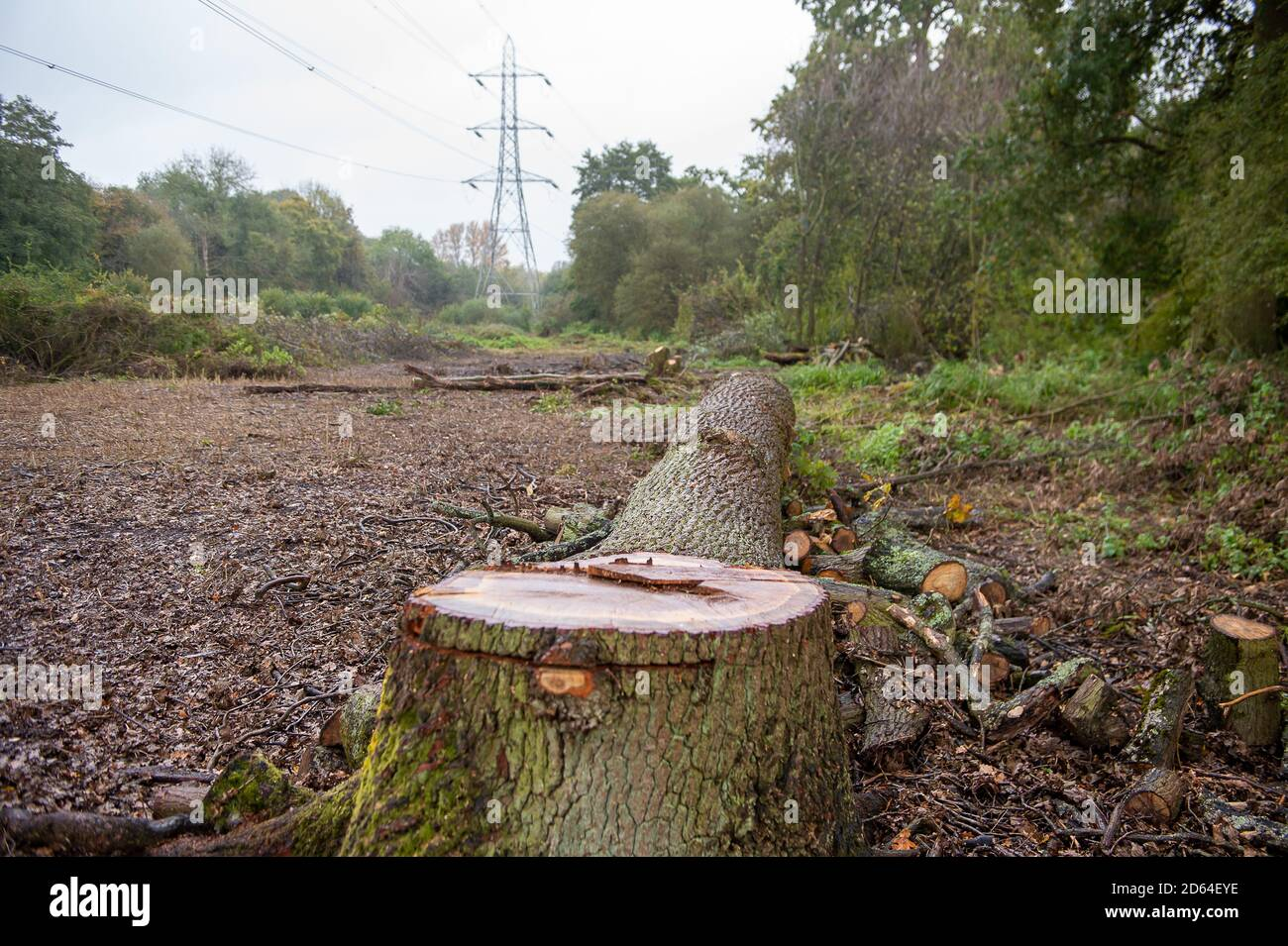 "Denham, UK. 14th October, 2020. HS2 have been felling a large area of trees in Denham Country Park in connection with the construction of the HS2 High Speed rail from London to Birmingham. Today another mature oak tree was destroyed. by HS2. Environmental campaigners from HS2 Rebellion allege that the tree felling in the ""tree graveyard"" near to two electricity pylons and the Grand Union Canal has been taking place in area that is not on the HS2 acquired land map and that therefore, the felling is allegedly illegal. Credit: Maureen McLean/Alamy Stock Photo"