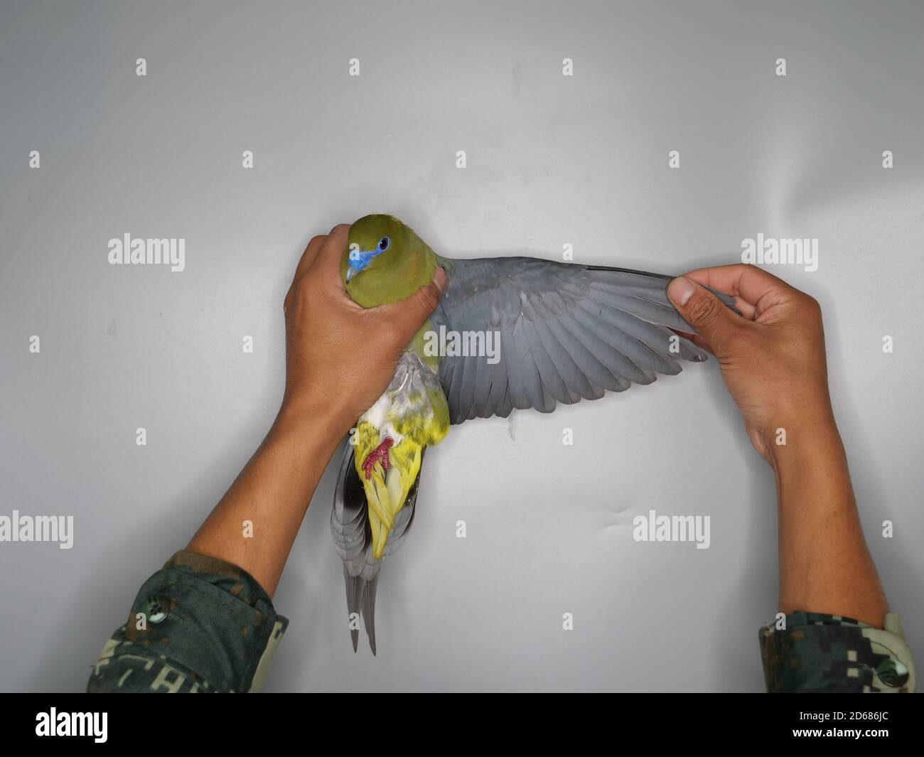 Cheng Qian High Resolution Stock Photography And Images Alamy