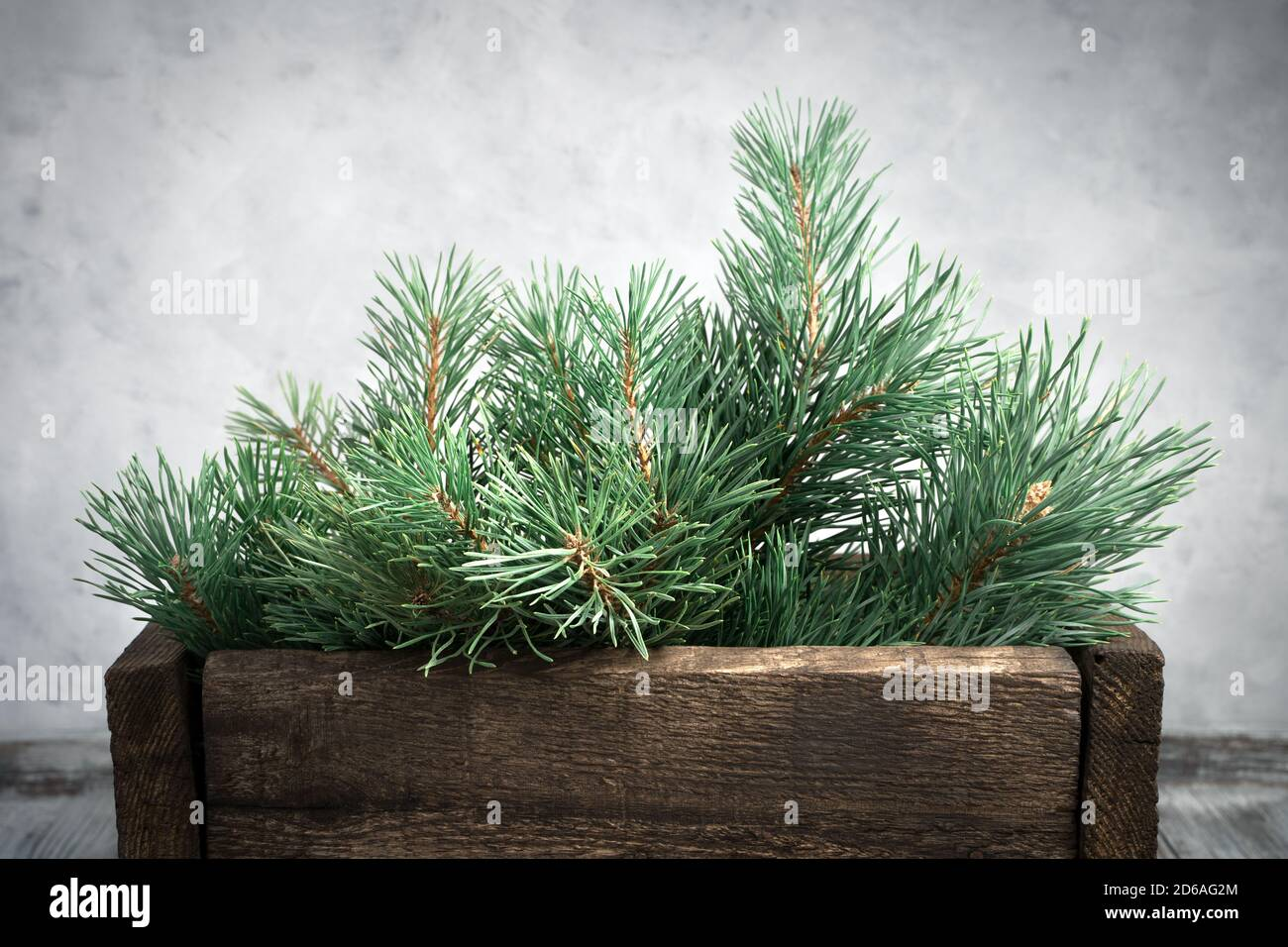 Pinehills Christmas On The Green 2021 Happy New Year 2021 And Christmas Green Pine Branches On A Gray Concrete Background Stock Photo Alamy
