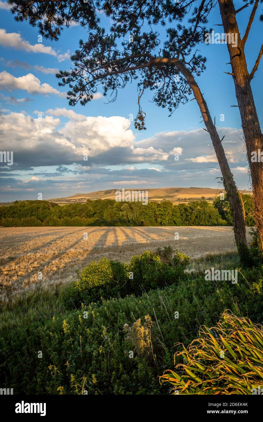 A view over farmland in the South Downs near Lewes, on a sunny summers evening Stock Photo