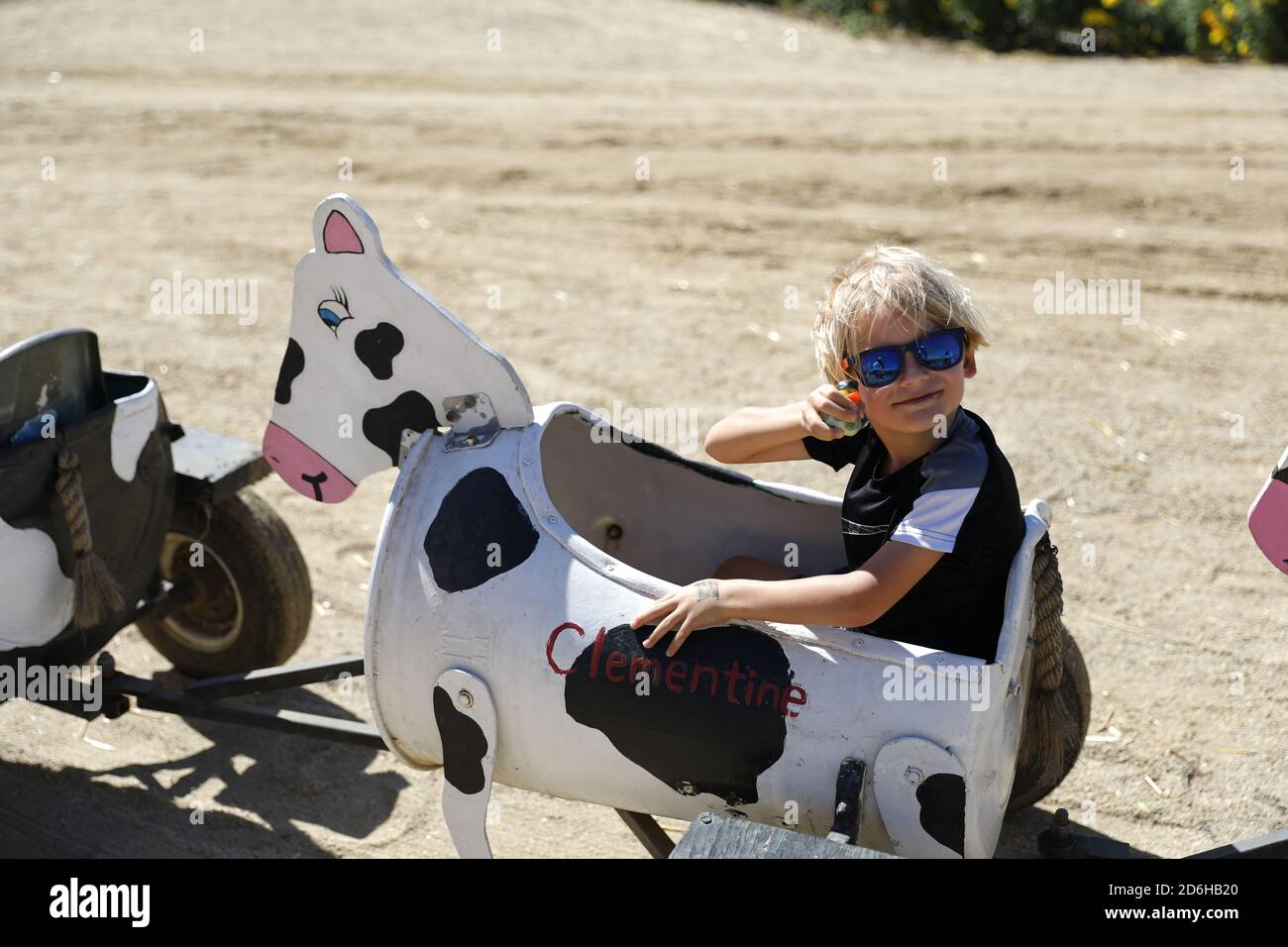 Cow ride at Fall Festival at Underwood Farms, Moorpark, California, USA Stock Photo