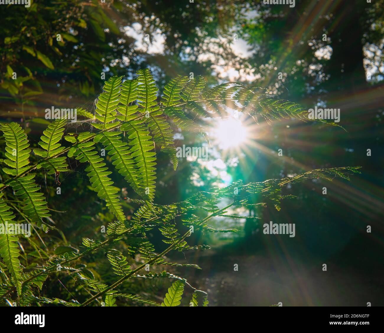 Farn im Sonnenlicht Stock Photo