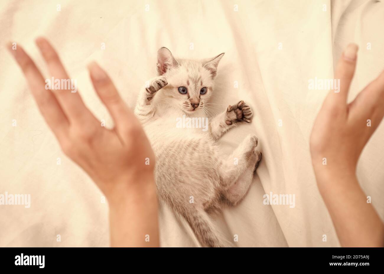 Page 3 Vet Bed High Resolution Stock Photography And Images Alamy