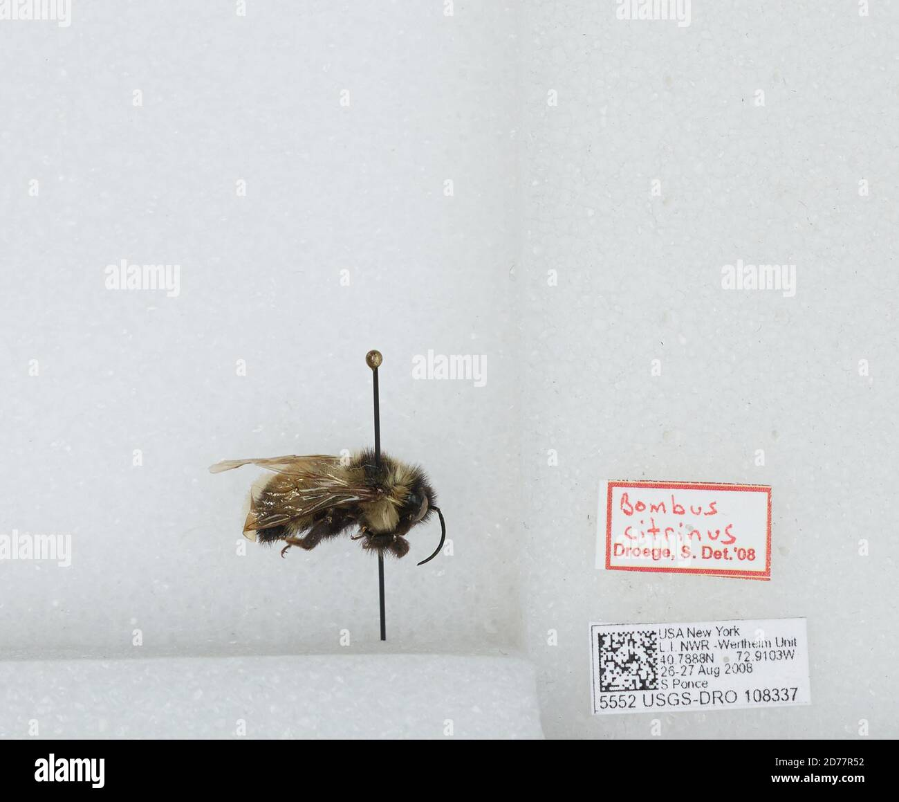 Hochseilgarten bettingen wertheim national wildlife odds of betting