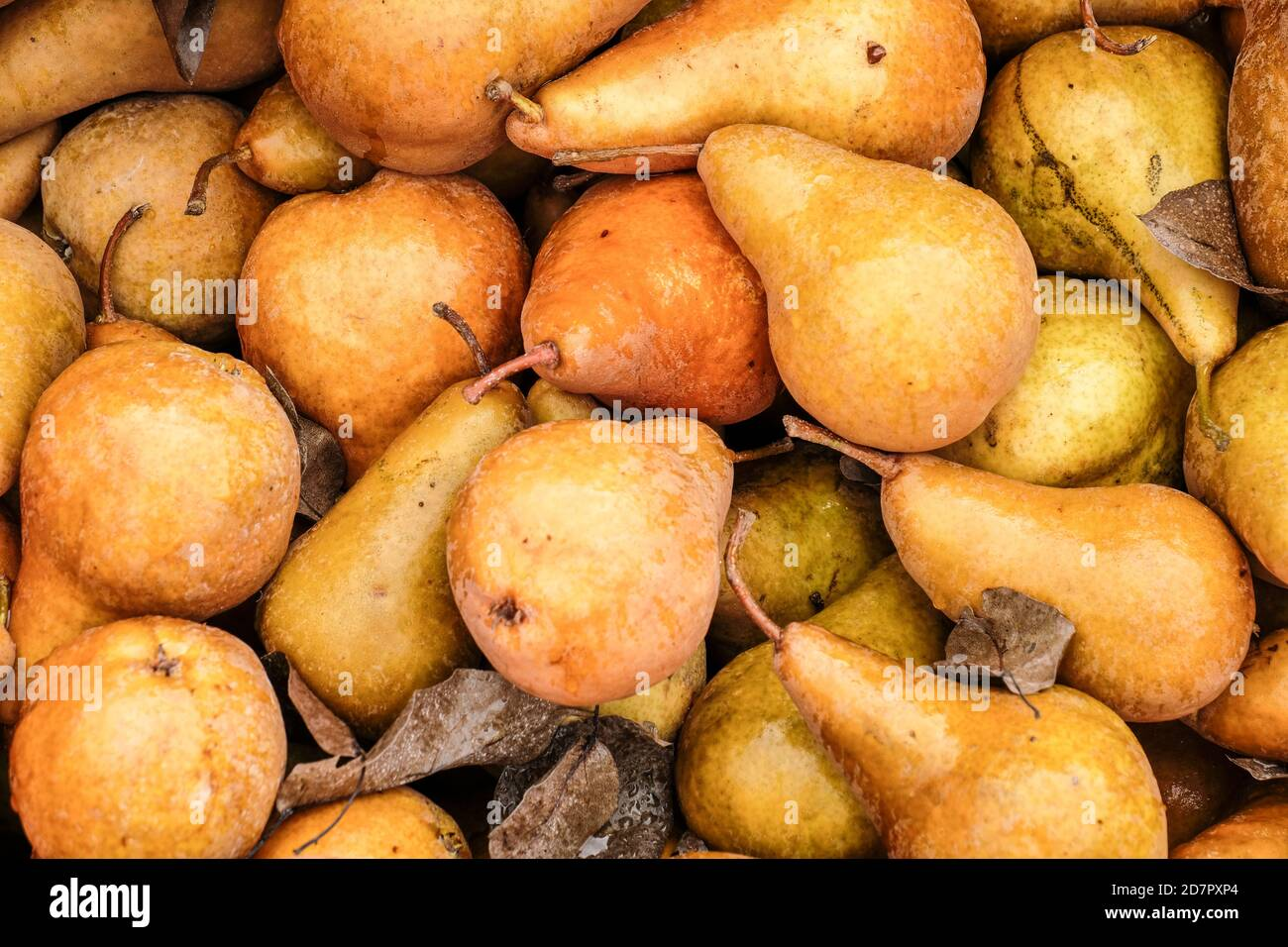 Close up view of Kaiser Golden Pears at a Roadside Fruitstand Stock Photo