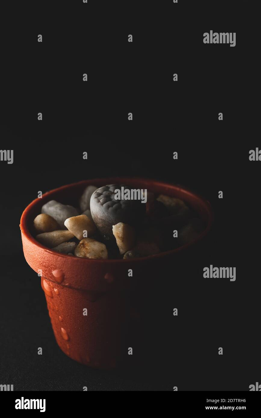 Lithops Cactus High Resolution Stock Photography And Images Alamy A wide variety of daisy brown options are available to you, such as material, age, and occasion. https www alamy com lithops succulent plant macro close up selective focus image383476050 html