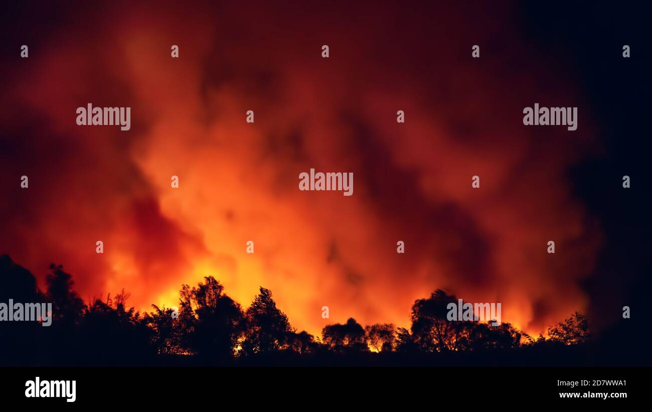 Panorama of forest fire at night, wildfire after dry summer season, burning nature. Stock Photo