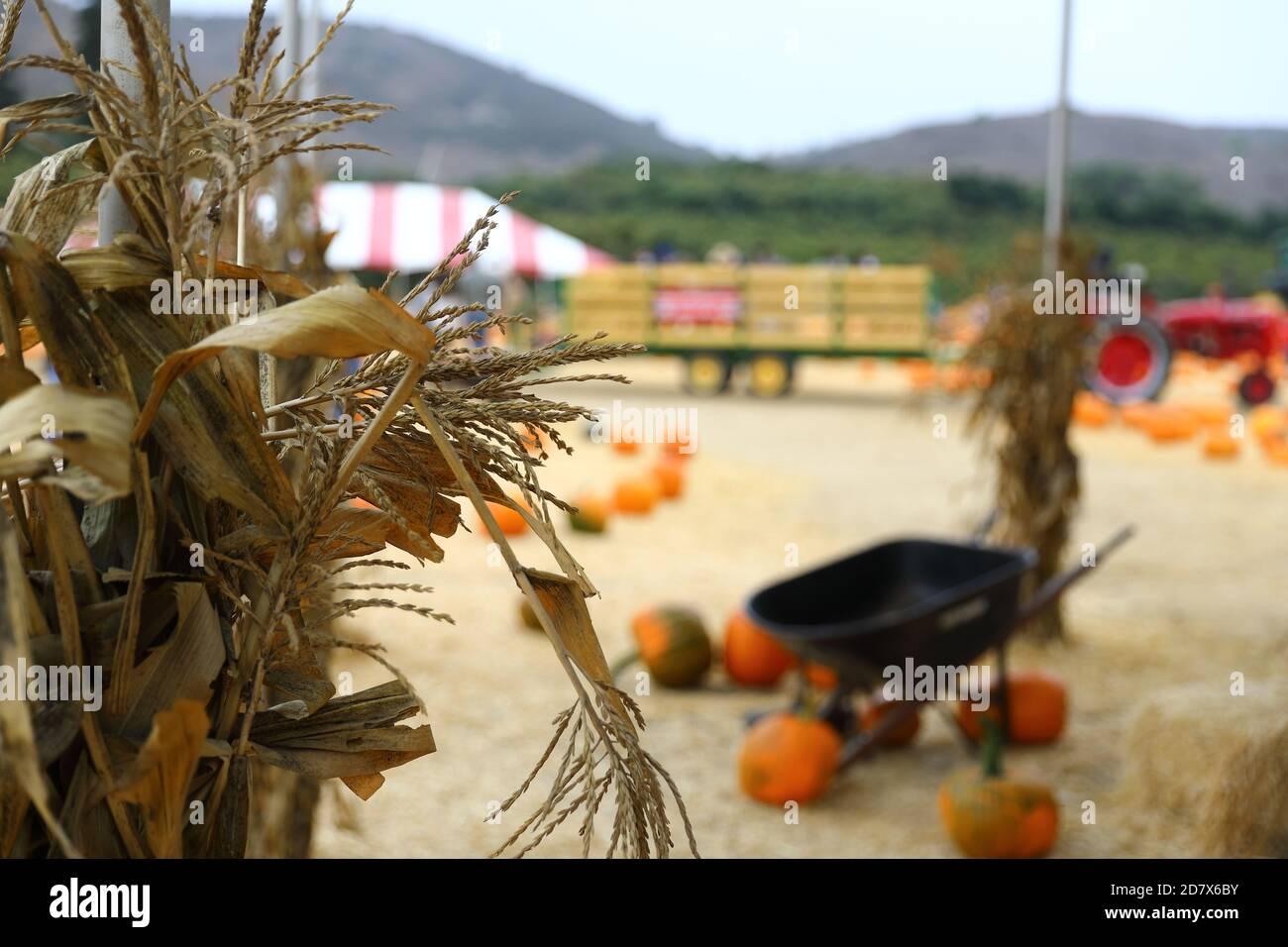 Underwood Farms Fall Festival Pumpkins 2020 Stock Photo