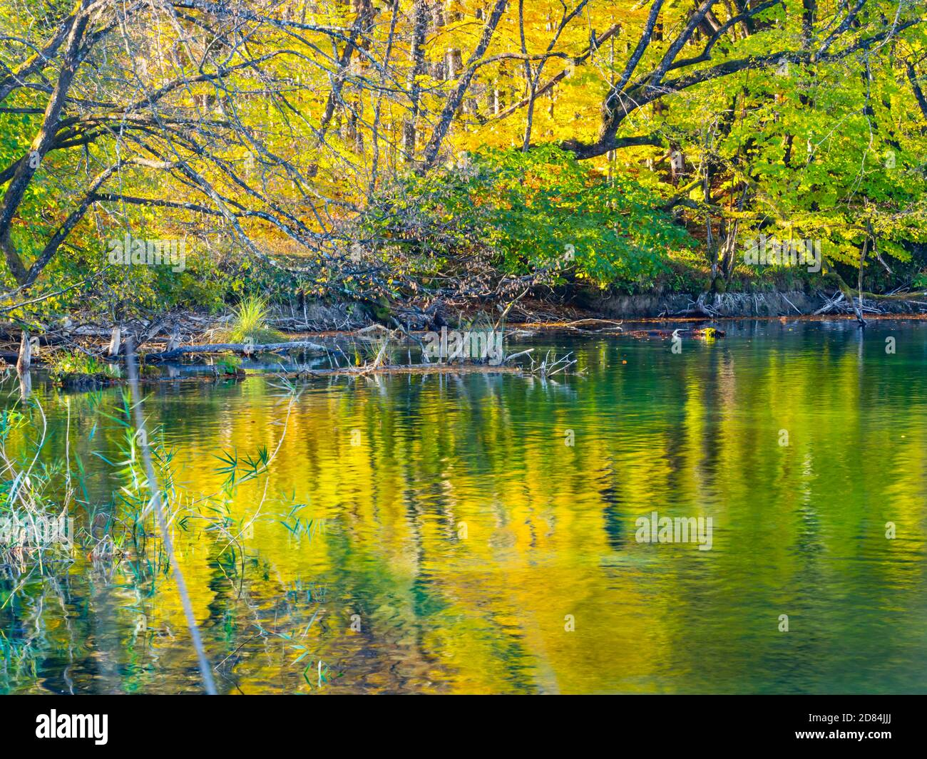 Lake coast reflection Autumnal scenery in Plitvice lakes national park situated in Croatia Europe Stock Photo
