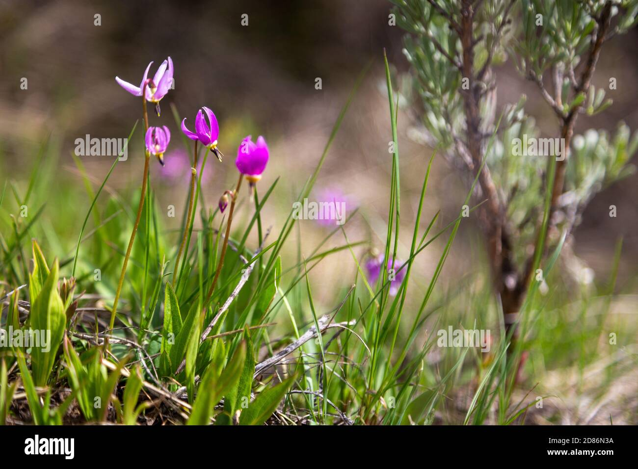 Lindas High Resolution Stock Photography And Images Alamy