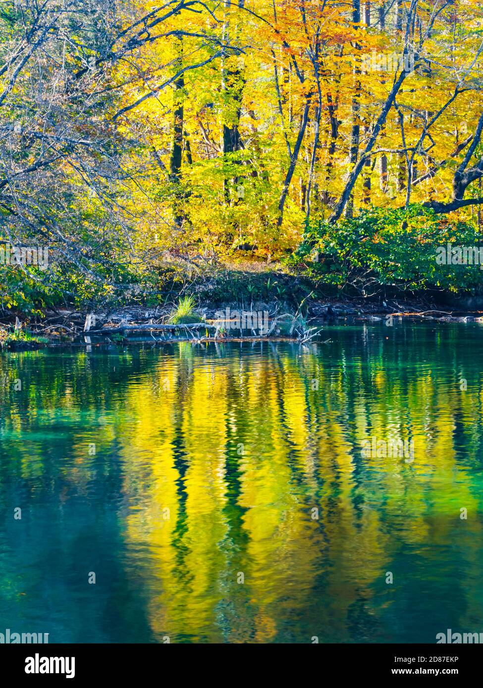 Lake coast reflection Autumnal scenery in Plitvice lakes national park situated in Croatia Europe nature natural silence Stock Photo