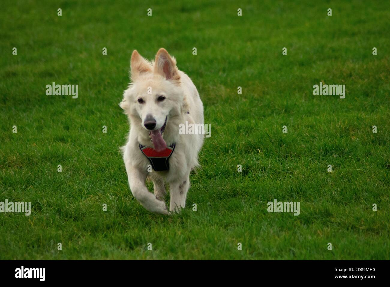 longhaired mutt Stock Photo
