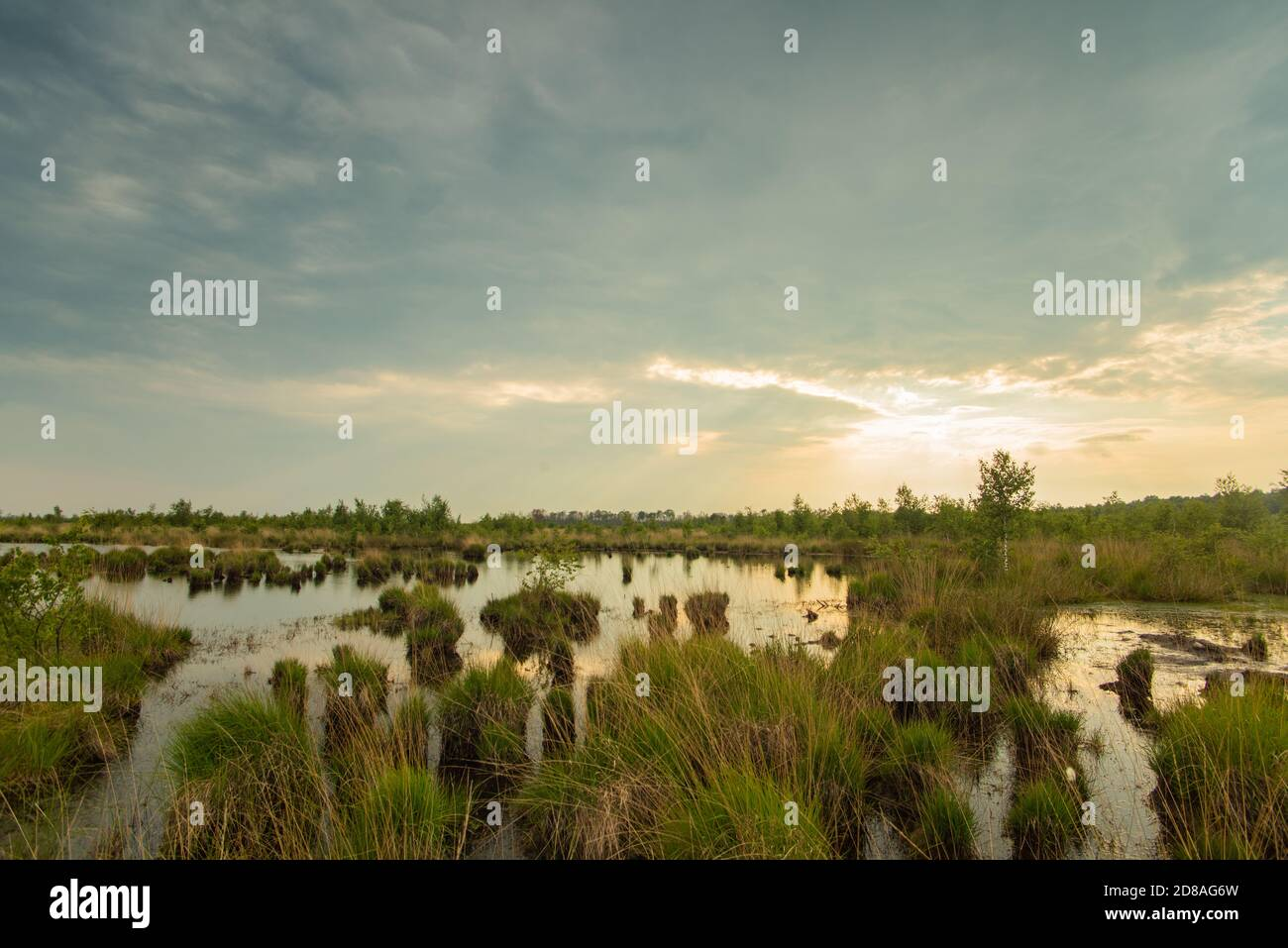 Scenic view of moor landscape in Lower Saxony. The Great Moor is part of the moorland between Barnsdorf and Vechta. Setting sun reflected in water. Stock Photo