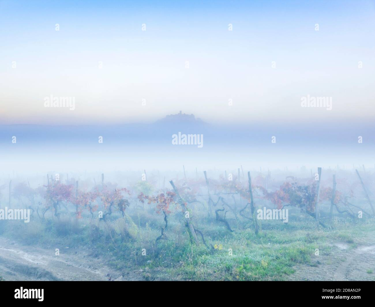 Pastel morning fog landscape Motovun in Istria Croatia Europe Red Autumnal leaves vineyard in foreground and oldtown on hilltop protruding through Stock Photo
