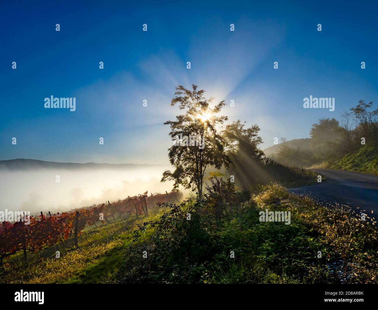 Good morning sunshine dramatic sunrays around sun sunburst behind tree branches Stock Photo