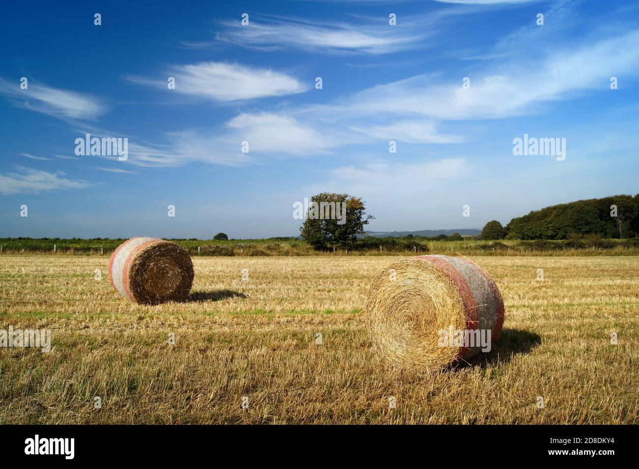 UK,South Yorkshire,Barnsley,Drum Hay Bales in Field near Silkstone Common Stock Photo