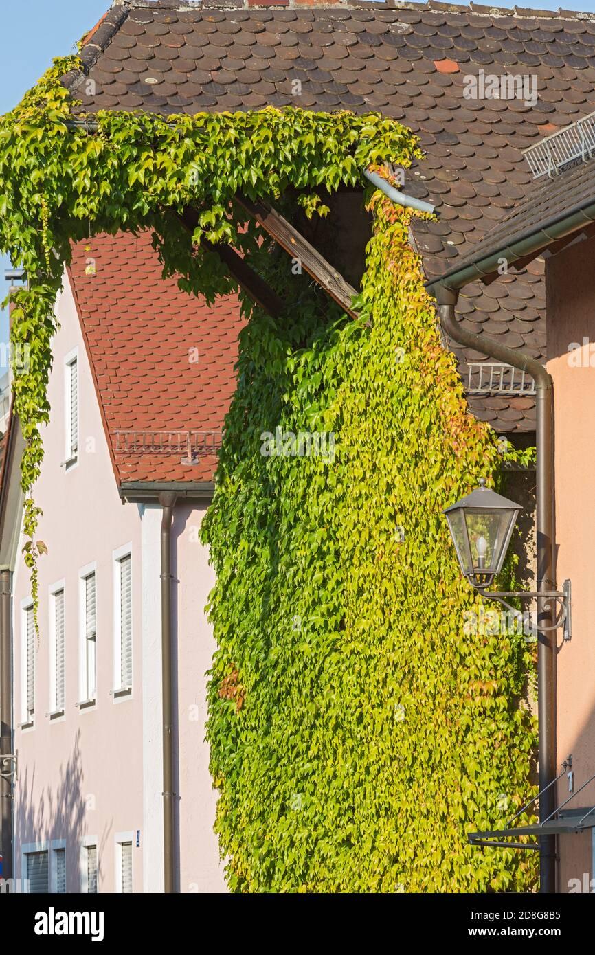 Beilngries, Poststrasse, altes Lagerhaus, Weinlaub Stock Photo