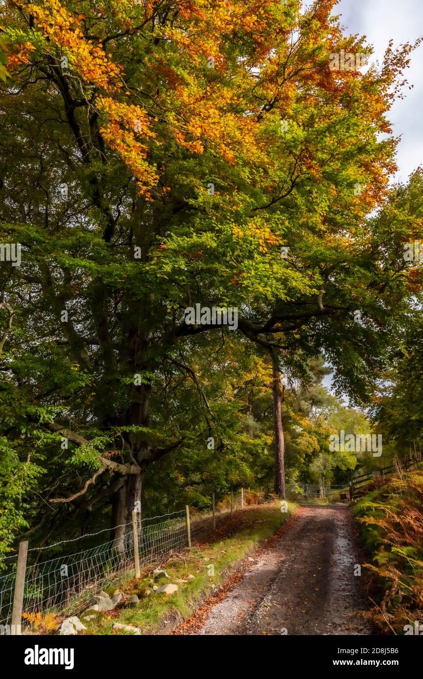 Trees in autumn near Cilcain, North Wales Stock Photo