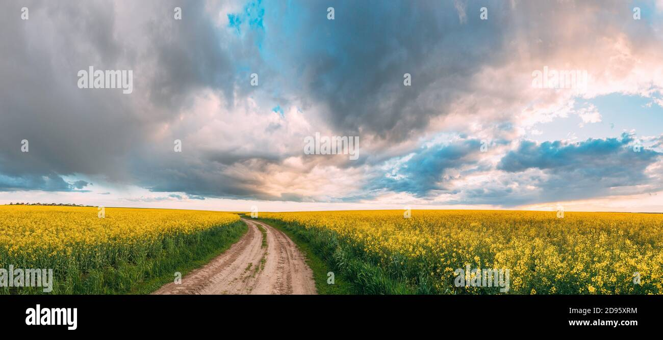 Elevated View Dramatic Sky With Fluffy Clouds On Horizon Above Rural Landscape Blooming Canola Colza Flowers Rapeseed Field. Country Road. Spring Stock Photo