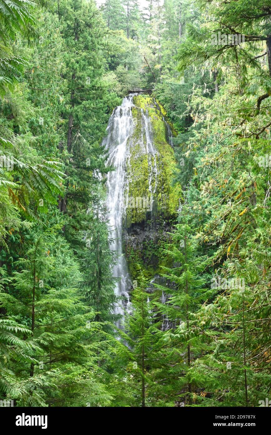 Proxy Falls, Willamette National Forest, Oregon, USA Stock Photo