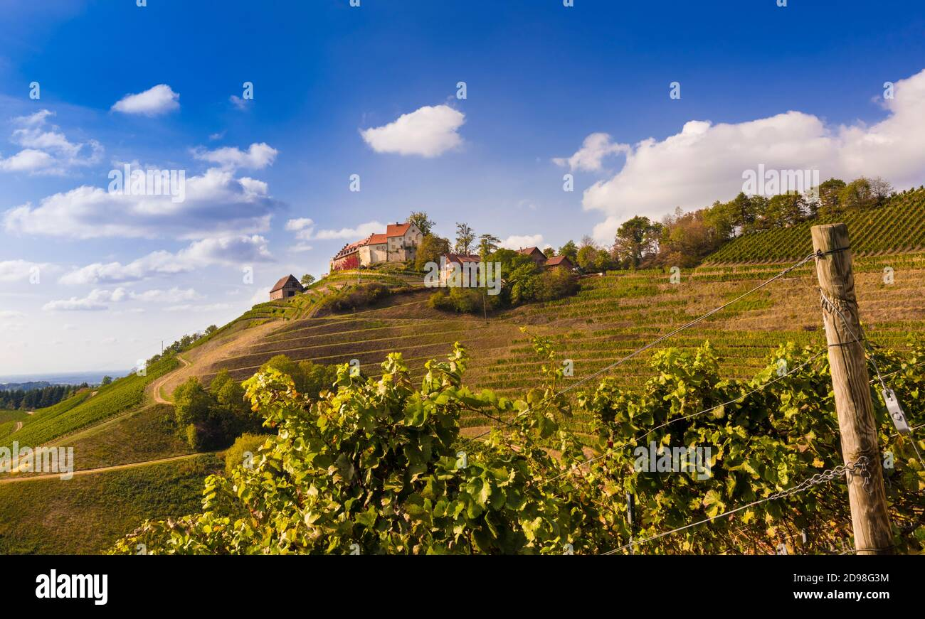 View of Staufenberg Castle in the middle of vineyards near the village Durbach_Ortenau, Baden Wuerttemberg, Germany Stock Photo