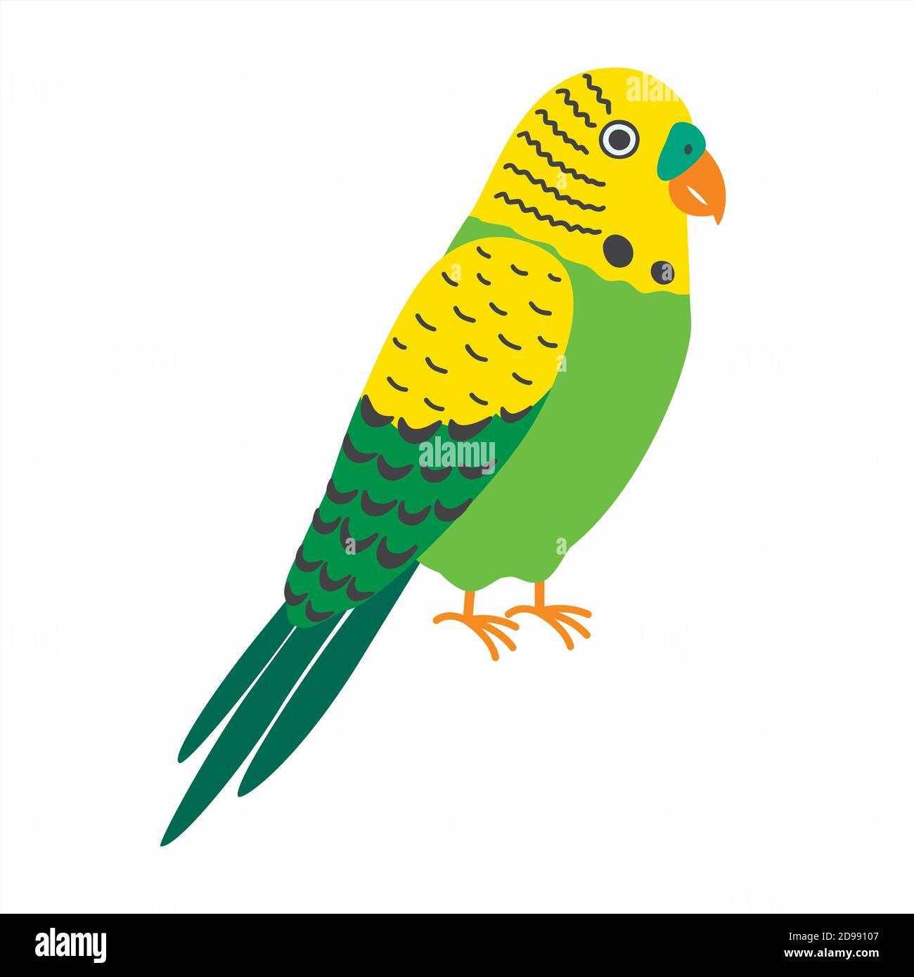 Budgerigar green parrot. Budgie common parakeet vector illustration. Stock Vector