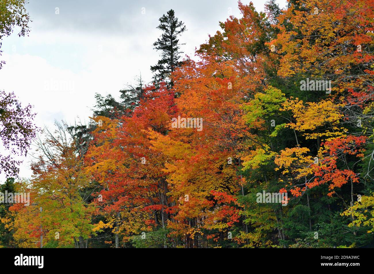 Paradise, Michigan, USA. Fall descends on a stretch of trees bordering a highway in the Upper Peninsula of Michigan. Stock Photo