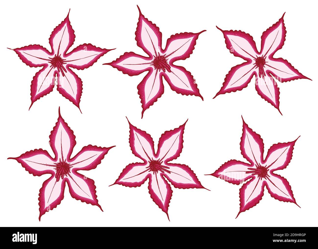 Impala Lily illustration. Set of 6 abstract lily flower vector illustration isolated on white background. Stock Vector