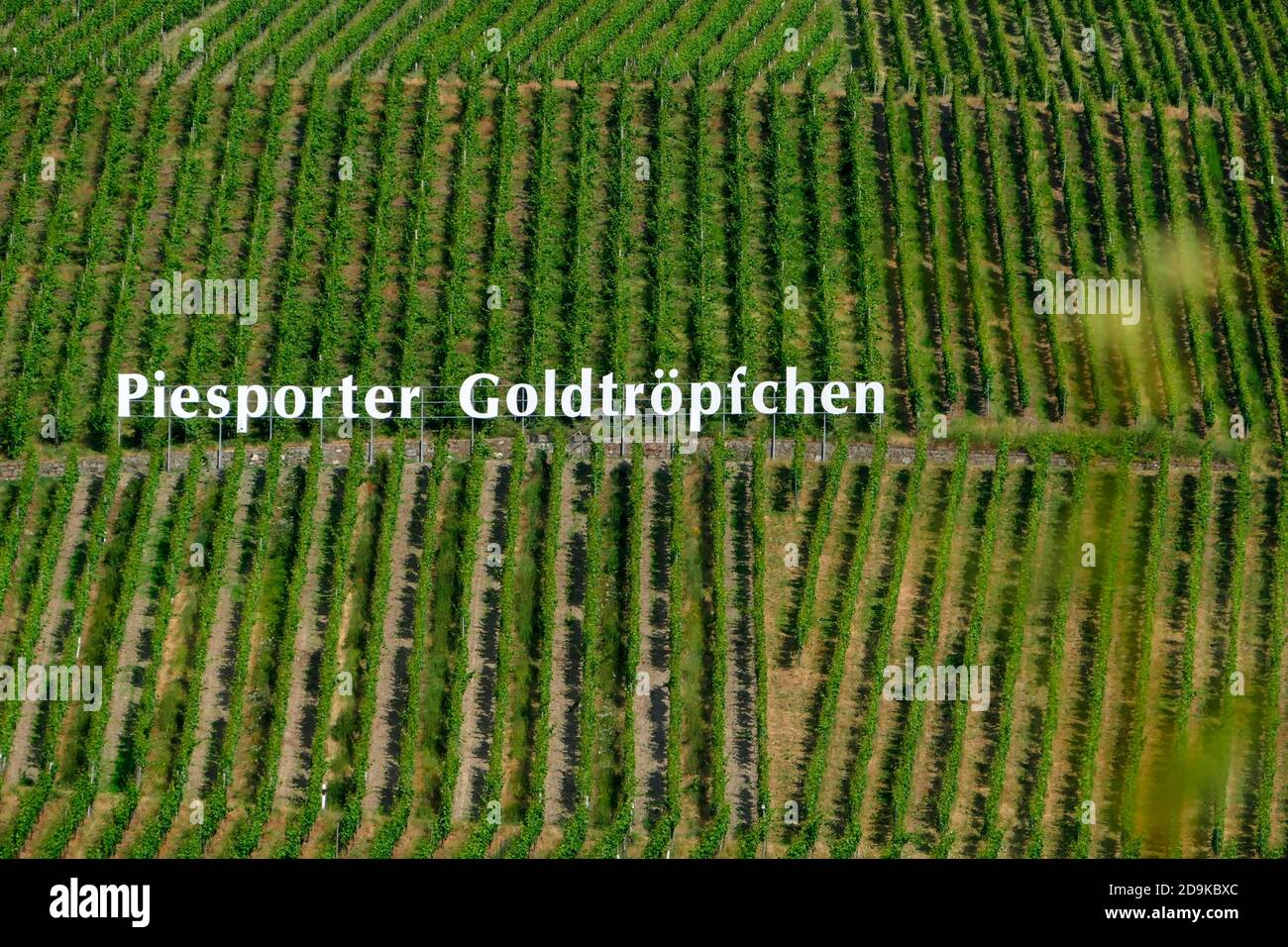 Weinberg, Piesport, Rheinland-Pflaz, Germany Stock Photo