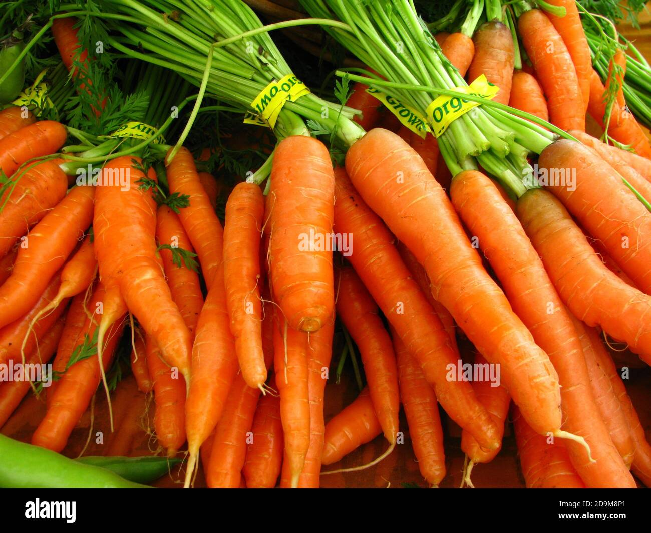 Closeup shot of fresh bundles of carrots with yellow tape displayed in a grocery Stock Photo