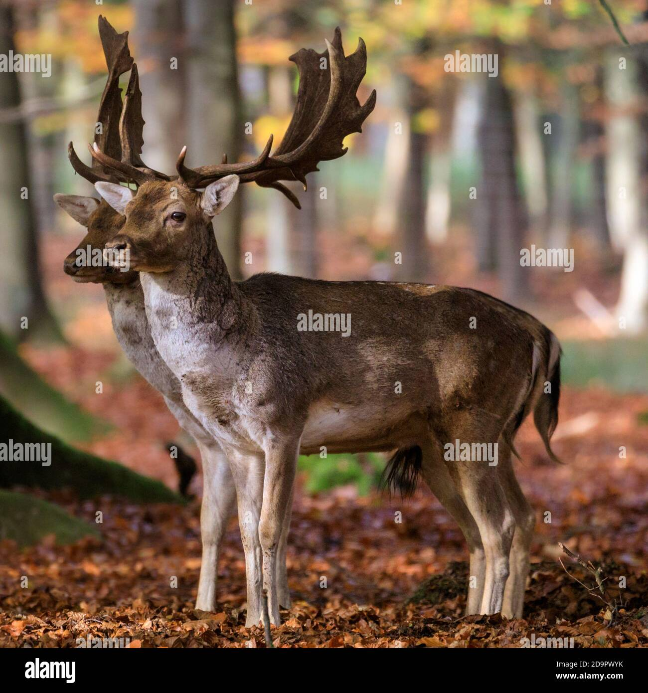 Page 2 In Sync High Resolution Stock Photography And Images Alamy