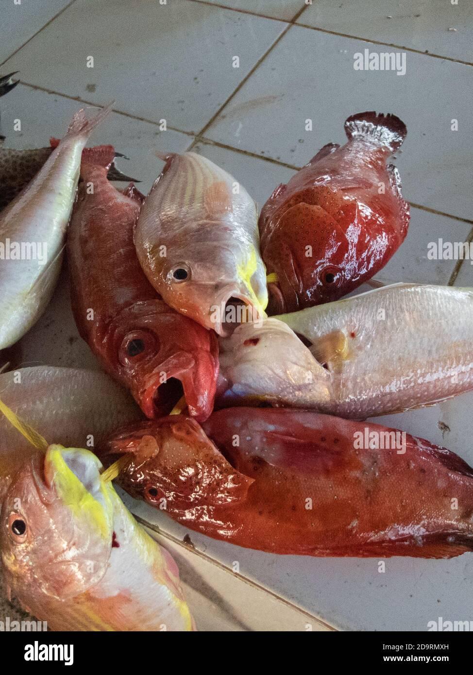 Close-up of fresh fish for sale at the Barka fish market near Muscat, Oman Stock Photo