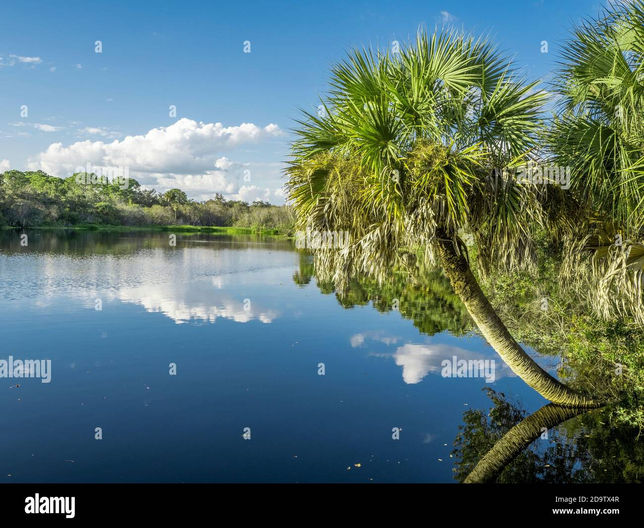 Deer Prairie Creek  in Deer Prairie Creek Preserve in Vemice Florida in the United States Stock Photo