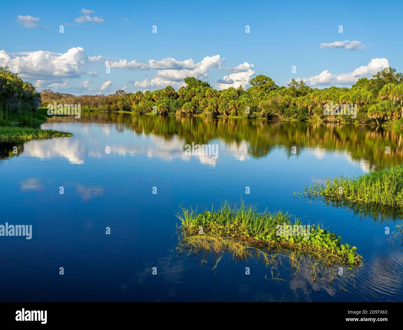 Deer Prairie Creek  in Deer Prairie Creek Preserve in Vemice Florida in the United States Stock Photo