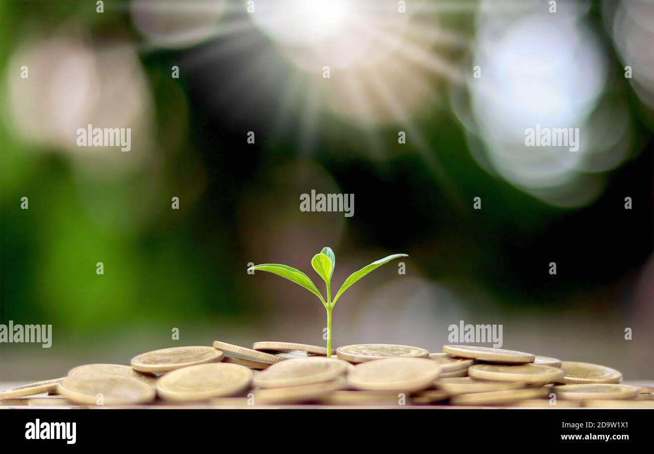 Plant trees from a pile of coins with the financial business concept. Saving and money growth. Stock Photo